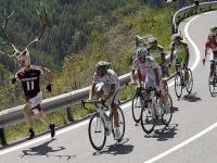 Велосипедно състезание