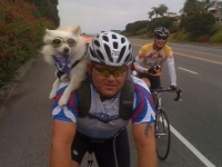 велосипедист с куче