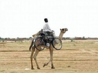 колело - камила